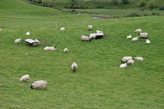 Irish sheep farm, Ireland Stock Photography