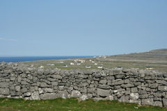 Irish Stone walls. Stone walls in Innis Mor Ireland Stock Images