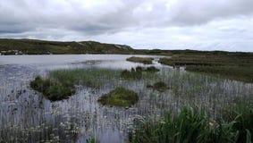 Irish storm rain. Marisma en Irlanda irish marsh flores acuáticas flowers in the marsh royalty free stock photo