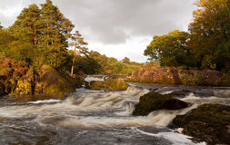 Irish Stream in Killarney National Park Stock Images
