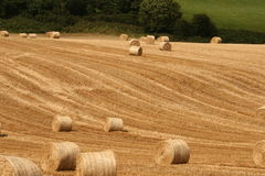 Irish stubble. Successful harvesting finishes difficult year of a very hard work. Farmers are happiest people all over the world Stock Photo