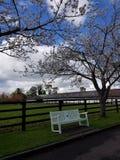 Irish Stud National park. And gardens,Kildare,Ireland stock photo