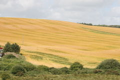 Irish summer scenery. All fields are changing colours only summer time in Ireland Royalty Free Stock Image