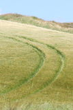 Irish summer scenery. Tractor prints in the rye, farmer was spreading pesticides. everything was done around 10 meters from the edge, from the irish cliffs Royalty Free Stock Photo