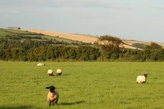 Irish summer scenery. All vegetation are growing up, typical panorama of irish village Stock Images