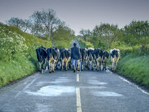 Irish Traffic Jam Royalty Free Stock Photo