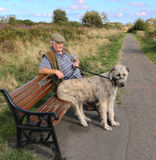 Irish Wolf Hound Sitting On Park Bench. Stock Photography