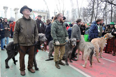 Irish wolfhound dogs at Saint Patrick`s Day celebration in Moscow Stock Photography