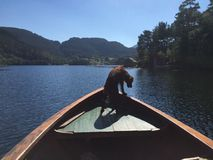 Irishsetter σε μια παλαιά βάρκα Στοκ Εικόνα