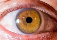 Irisphotographie Naher Makroschuß eines Augapfels Bernsteinfarbig oder braun mit Kanten lizenzfreie stockfotos