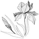 Irissen in een vector geïsoleerde stijl Royalty-vrije Stock Afbeeldingen
