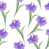 Irissen op wit Stock Foto