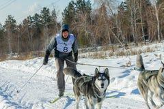 Irkutsk, Russia - January 28, 2017: Racing competition for dog s. Ledding and skijoring Angara beads 2017 Royalty Free Stock Photos