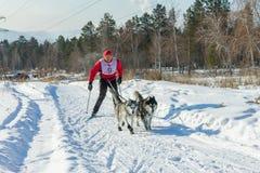 Irkutsk, Russia - January 28, 2017: Racing competition for dog s. Ledding and skijoring Angara beads 2017 Stock Image