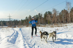 Irkutsk, Russia - January 28, 2017: Racing competition for dog s. Ledding and skijoring Angara beads 2017 Royalty Free Stock Photography