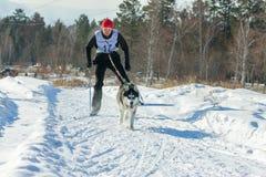 Irkutsk, Russia - January 28, 2017: Racing competition for dog s. Ledding and skijoring Angara beads 2017 Stock Photo
