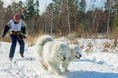 Irkutsk, Russia - January 28, 2017: Racing competition for dog s. Ledding and skijoring Angara beads 2017 Stock Images