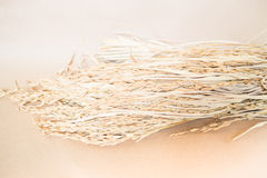 Irländare- eller riskorn (oryza) på brun bakgrund Arkivfoton