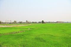 Irländarefält eller risfält Arkivbild