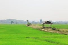 Irländarefält eller risfält med stugan Fotografering för Bildbyråer