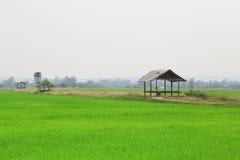 Irländarefält eller risfält med stugan Arkivbild