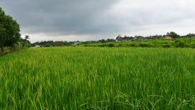 Irländarefält i Yogyakarta royaltyfri fotografi