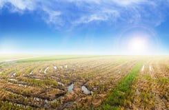Irländarefält med soluppgångbakgrund Arkivbilder