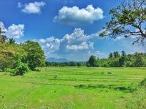 Irländarefält och blå himmel Fotografering för Bildbyråer