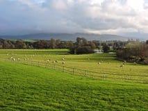 Irländsk bygd Arkivbild