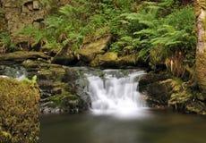 irländsk djungel arkivfoto