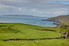 Irländsk lantgård Fotografering för Bildbyråer