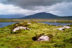 irländsk liggande Arkivbild