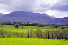 irländsk liggande royaltyfria foton