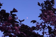 Irländsk måne Arkivbilder