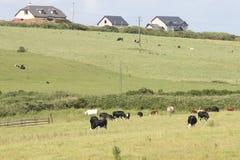irländsk medelsommar för lantgård royaltyfria foton