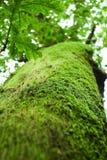 irländsk moss Royaltyfria Foton