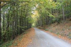 irländsk väg Arkivbild