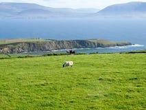 Irländskt intryck Fotografering för Bildbyråer