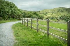 Irländskt utomhus- grönt landskap med ett trästaket royaltyfri foto