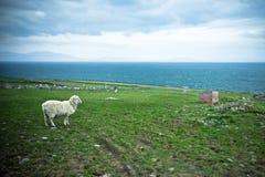 irland Stockbild