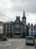 irland malve Lizenzfreies Stockfoto
