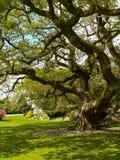 irlanda Parque nacional de Killarney Fotos de archivo