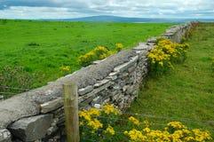 Irlandczyków pola Fotografia Royalty Free