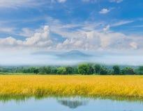 Irlandczyków ryż pole z pięknym niebem i clo fotografia royalty free