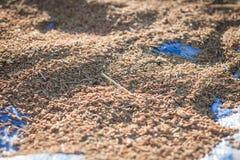 Irlandczyków ryż tło w zmierzchu Zdjęcie Royalty Free