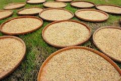 irlandczyków suszarniczy ryż Zdjęcia Stock