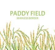 Irlandczyka pola bezszwowa granica Wektorowa ilustracja ucho ryż royalty ilustracja