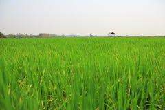 Irlandczyka pole lub ryżu pole z chałupą obraz royalty free