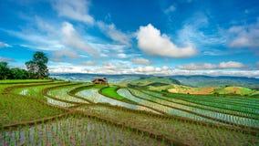 Irlandczyka Rice pole Mountain View obrazy royalty free