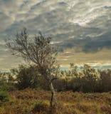 Irlandese Autumn Tree Fotografia Stock Libera da Diritti